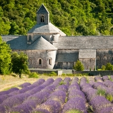Provence – lavender fields in front of the camera lens