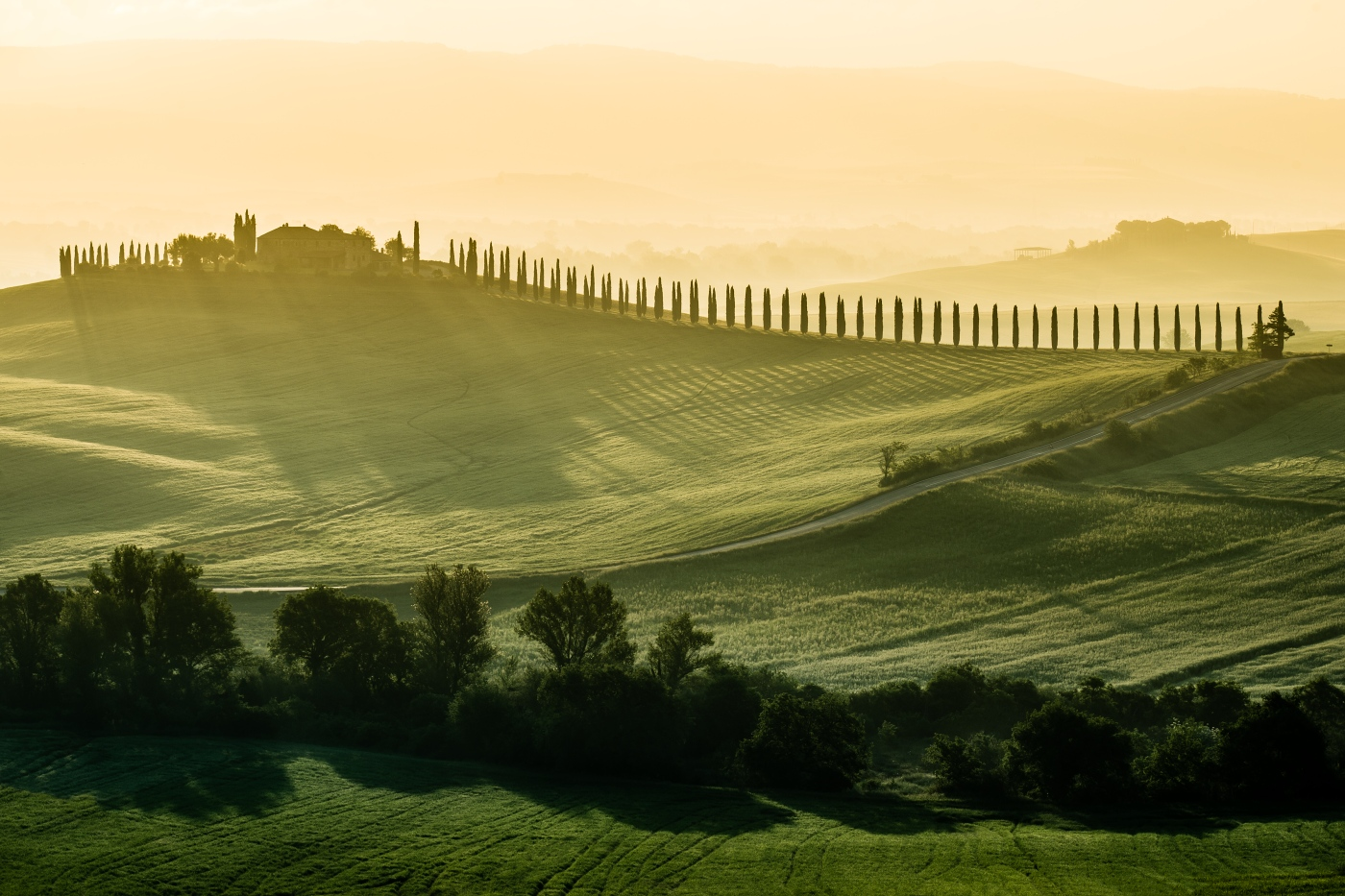 The cypresses of Tuscany